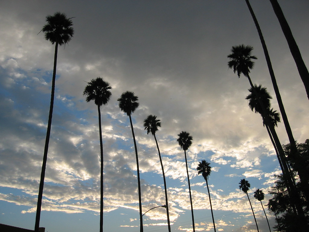 Palm trees against a partly cloudy sky