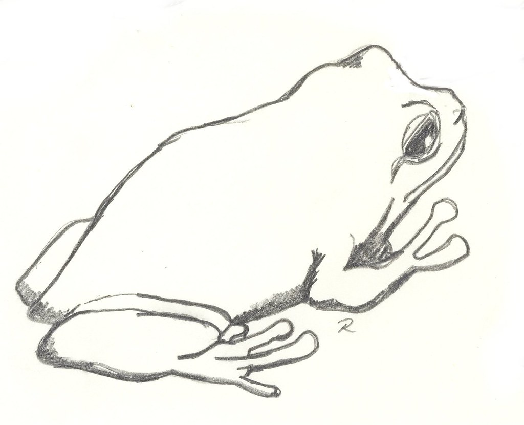 tree frog some sketches of animals that i found in derby w u2026 flickr