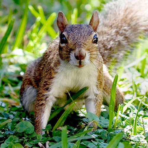 squirrel5 | by hodad66