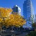 Autumnal City