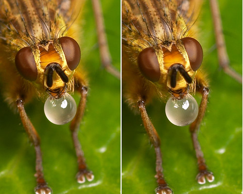 3-D crosseye stereogram of bubble blowing | by Lord V