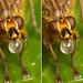 3-D crosseye stereogram of bubble blowing