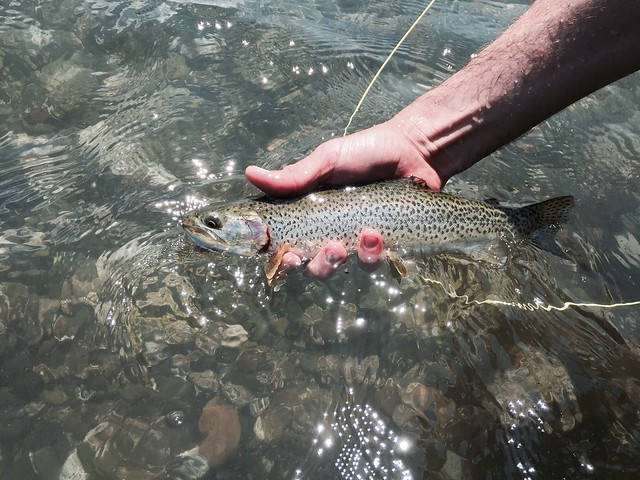 searun-cutthroat-flyfishing