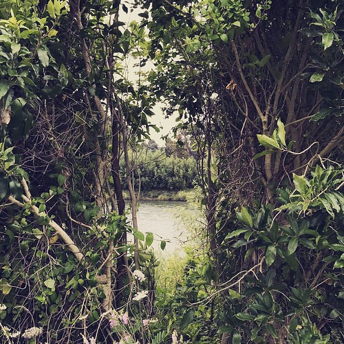 Manawatu river walkway | by AboHadi
