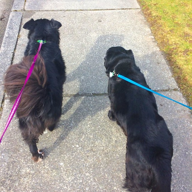 Too bad my mother picked the week M. is going through a growth spurt to visit...we are SO TIRED! 😭Nevertheless, a family dog walk felt good.