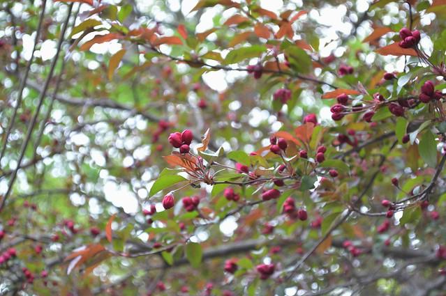 Tree buds