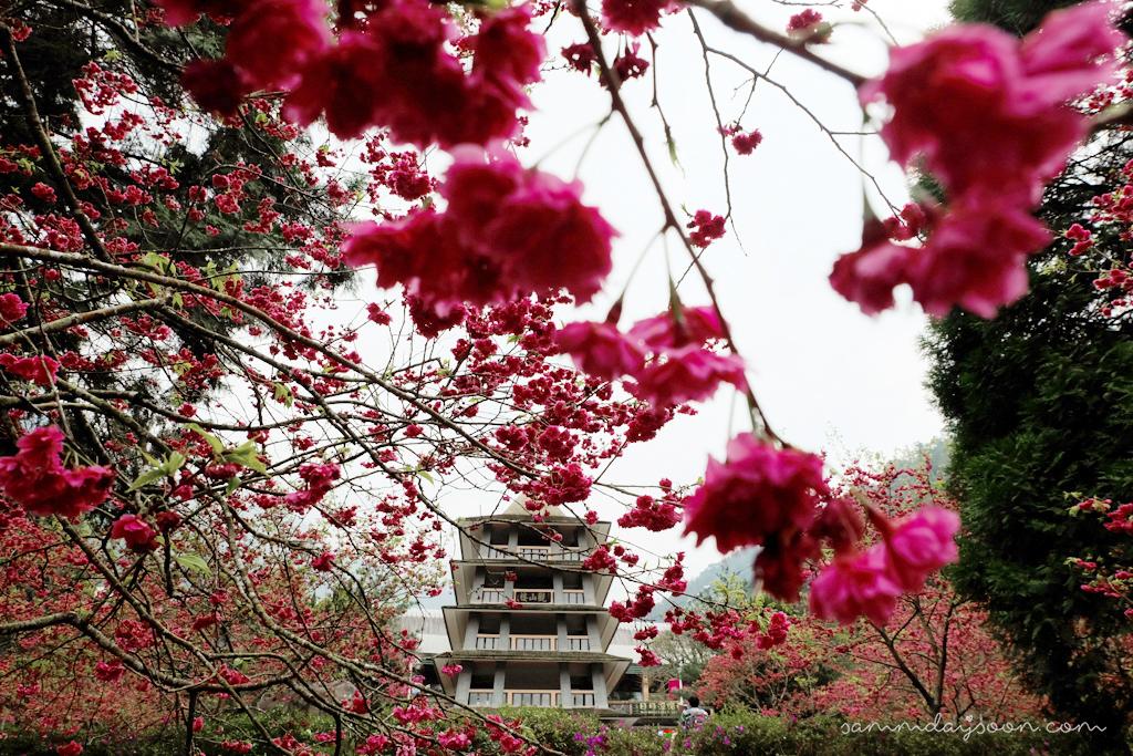formosan-aboriginal-culture-village-cherry-blossom-entrance