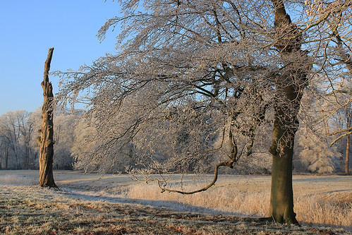 Winter with frost