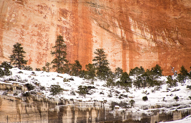trees & red rock