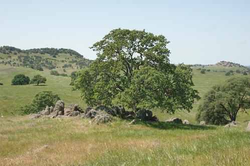 Oak and rocks. | by Campin' Guy