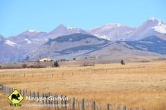 West Elk Gunnison colorado USA États-Unis