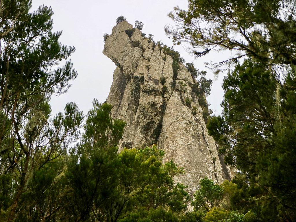 Roque Anambro, El Pijaral