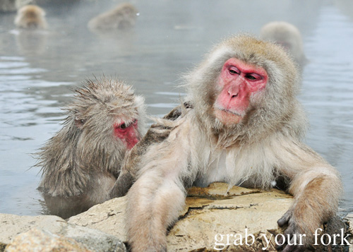 Snow monkeys grooming each other in the outdoor onsen at Jigokudani Monkey Park, Nagano