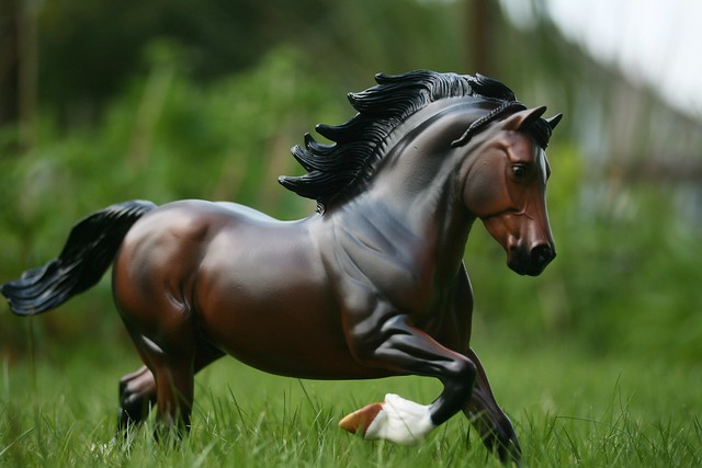 EA Fantastic Mr Copperfox - Welsh Cob - stallion - OF - EG10