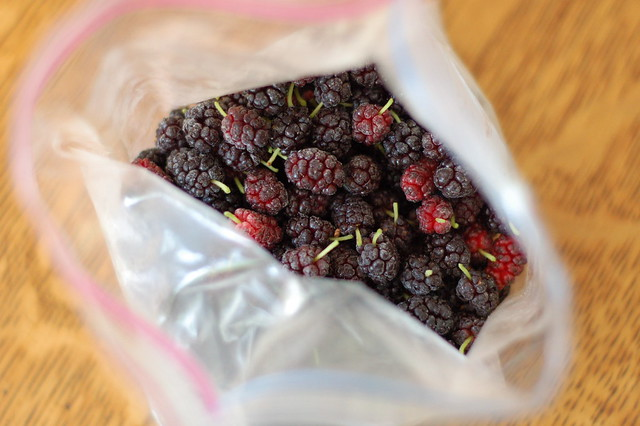 Frozen mulberries by Eve Fox, The Garden of Eating, copyright 2015