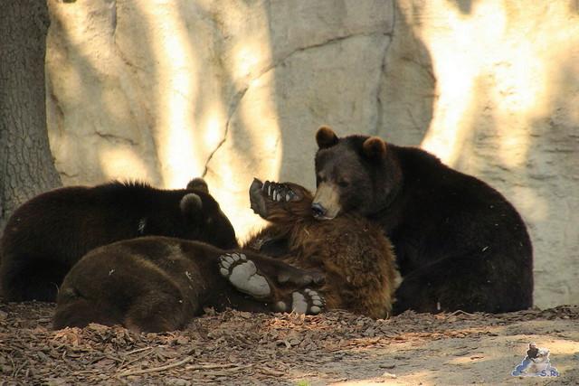 Tierpark Hagenbeck 04.07.2015  180