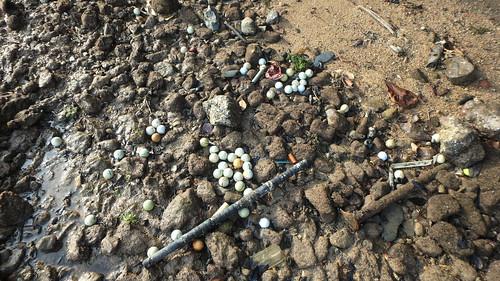 Golf balls on Berlayar Creek shore
