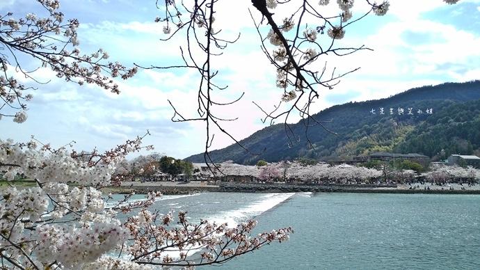 3 京都 嵐山渡月橋 賞櫻 櫻花 Saga Par 五色霜淇淋 彩色霜淇淋