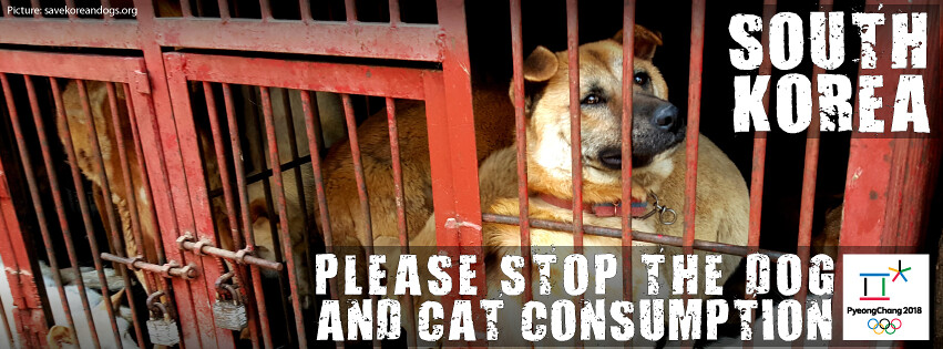National Olympic Associations: Take a stand in Pyeongchang 2018 against the dog and cat meat trade!