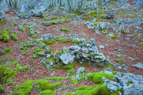 Parque Natural de Gorbeia  #DePaseoConLarri #Flickr -5349