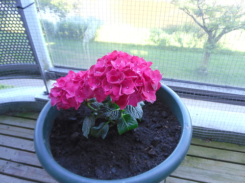 Pink plant on balcony