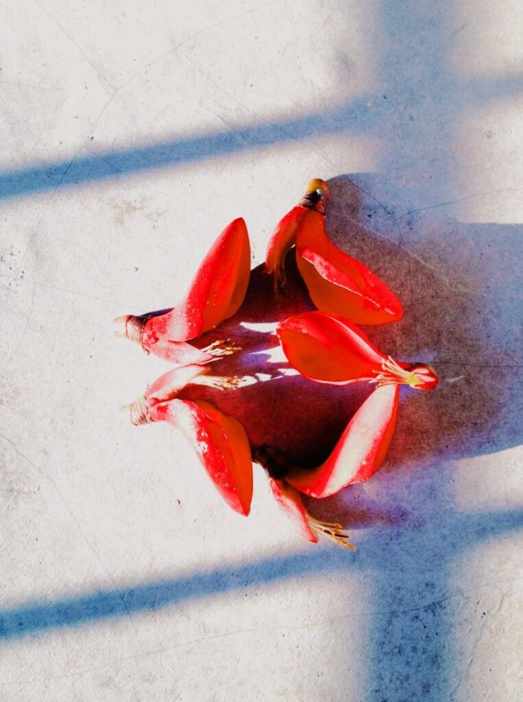 lumi vsco red petals