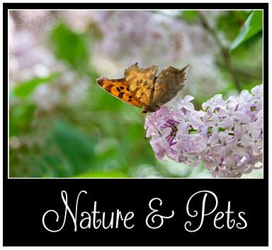 Nature & Pets Portfolio Button