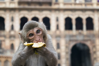 Going Bananas / Dake Kang, '16 | by UChicago Study Abroad