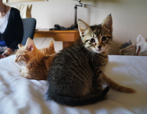 blogpaws-kittensC01576
