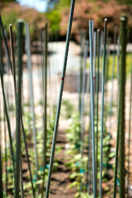 Garden - Planting Season