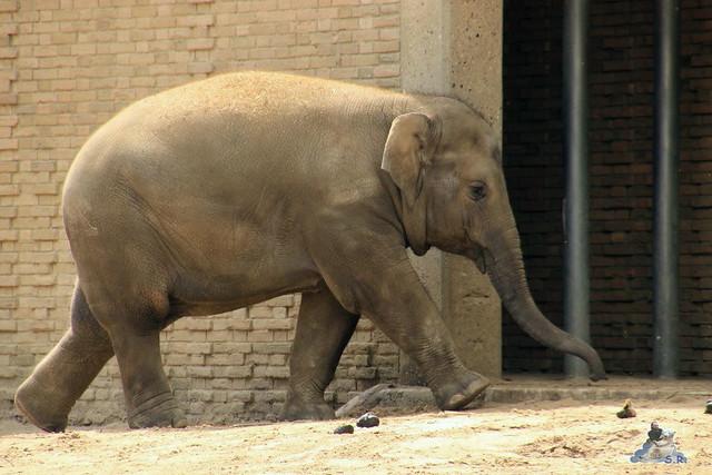 Zoo Berlin 19.06.   20153