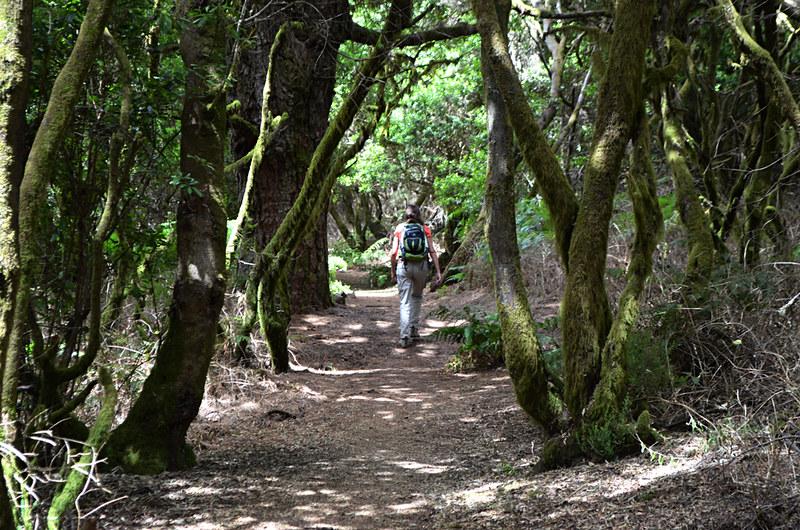 Walking in forest, El Hierro, Canary Islands