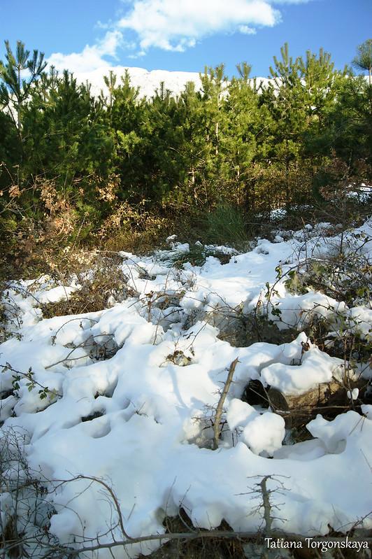 Хвойный лес в окрестностях Камено