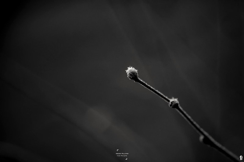 Abstract black and white nature photography