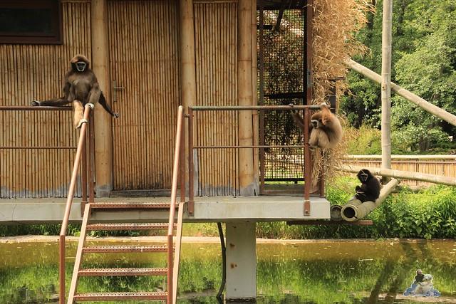 Tierpark Berlin 13.06.2015   167