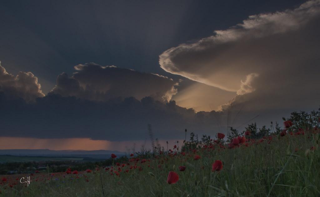 vihar-1506