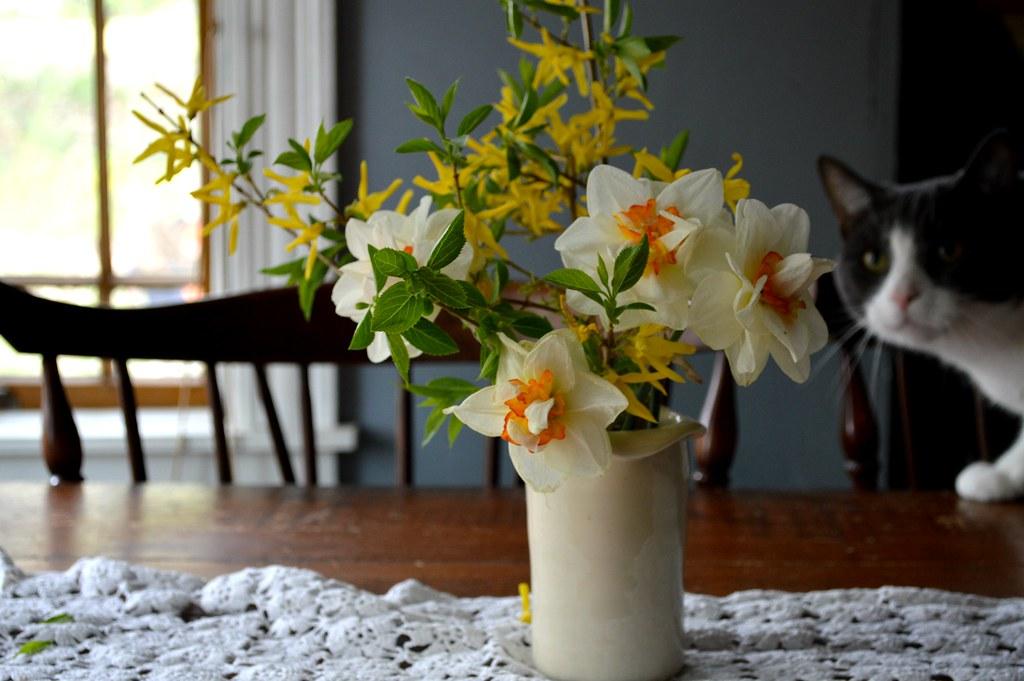 Daffodil Vase Amanda Wytas Ackermann Flickr