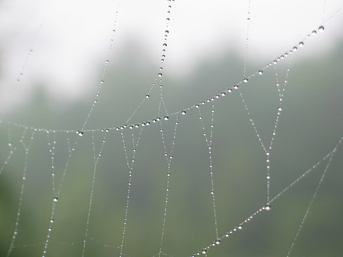 The Web | by Busiavka