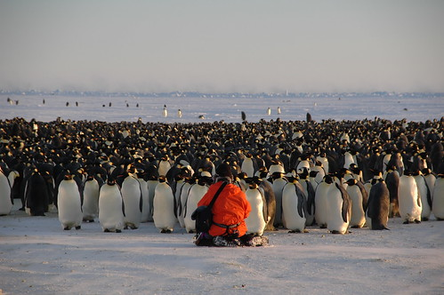 Penguins galore! | by BrynJ