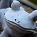 Frog Poser