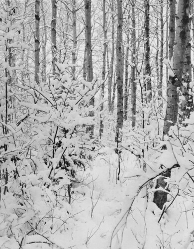 snowy woods  L.E.S. | by withrow