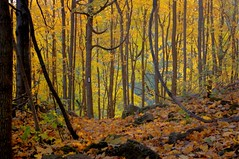Bruce Trail Autumn Too | by Ross Belot