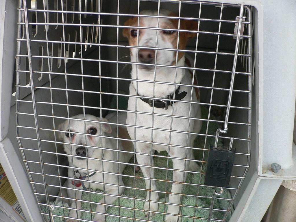Spca Dogs For Adoption In Virginia Beach