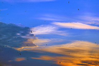 Gulls Coming In | by Mc Shutter
