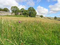 Lower Whinskill meadow