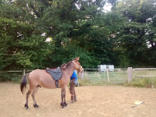 Very Fine Mule