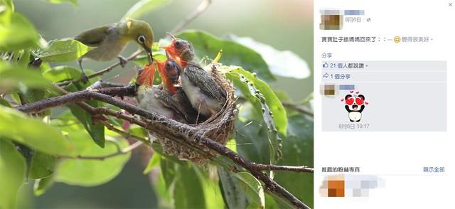 鳥類育雛照是常見的擺拍題材,然而眼尖的專家一眼就看出來鳥巢依附的樹枝和背景枝葉不同。暴露巢位會讓雛鳥面臨極大的危險。圖片來源:Facebook擷圖。