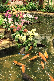 Neuseeland & Singapur 2015 - Im Orchideengarten des Changi Airports Singapur