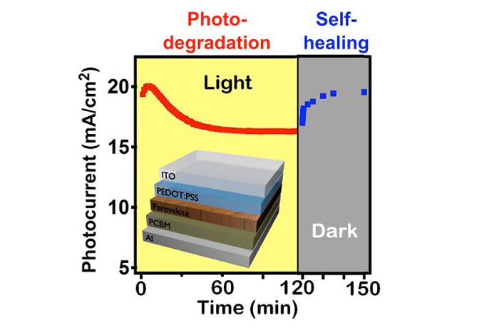 Organometallic halide perovskite solar cells demonstrate photocurrent-degradation under sunlight and self-healing in the dark.
