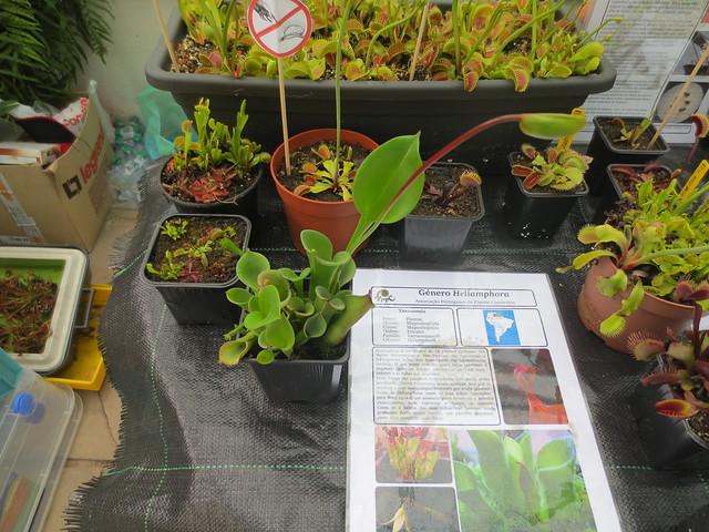 Exposição Jardim Botânico da Ajuda - Abril 2015 18719281786_cdd229ccdc_z